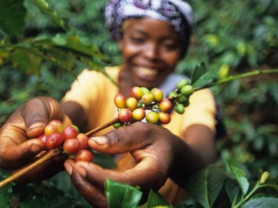 Interview: Coffee + Ethical Biz Talk with Lloyd Bernhardt of Ethical Bean