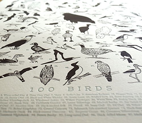 Quail Lane Press-100 Illustrated Birds, Letterpress Print