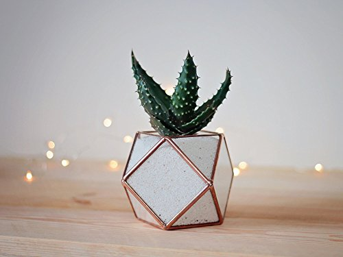 Waen-Mini Desk Planter