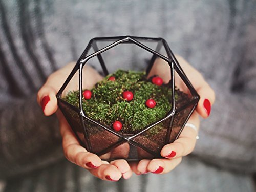 Waen-Geometric Moss Terrarium Container