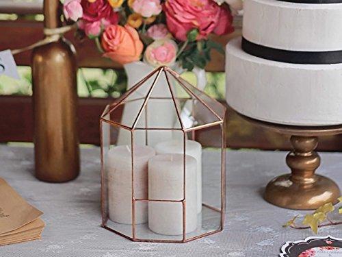 Waen-Large Terrarium Container