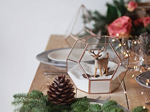 Waen-Glass Geometric Terrarium Container