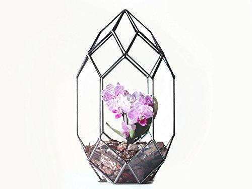 Waen-Geometric Terrarium Container