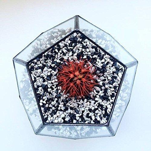 Leosklo-Large Terrarium Dodecahedron