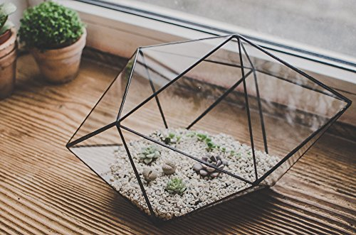 Leosklo-Set of two Terrariums for Succulents