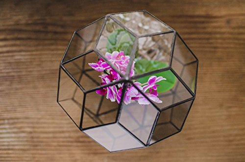 Leosklo-Orchid Terrarium Small Rocket