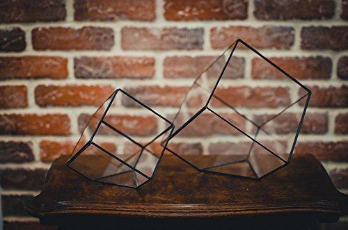 Leosklo-Large Terrarium Cube