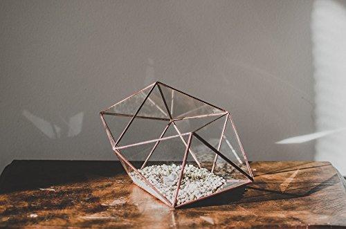 Leosklo-Terrarium Small Strange Shape