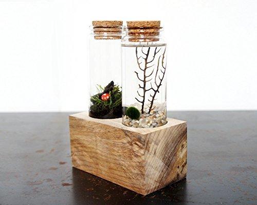 Moss + Twig-Land & Sea Terrarium Set