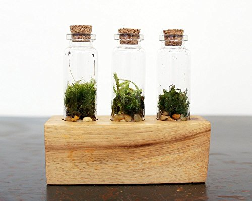 Moss + Twig-Triple Vial Terrarium Kit