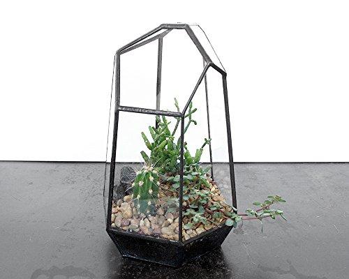Moss + Twig-Glass Geo Terrarium