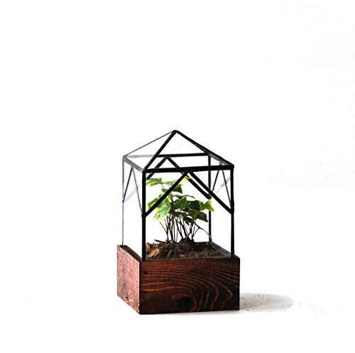 LeadHeadGlass-Terrarium Elias Trap