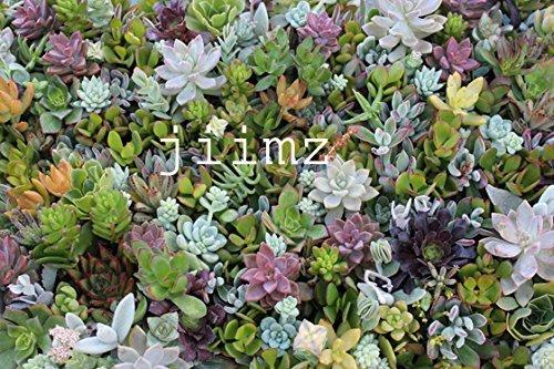 jiimz Succulents-28 Succulent Vertical Garden