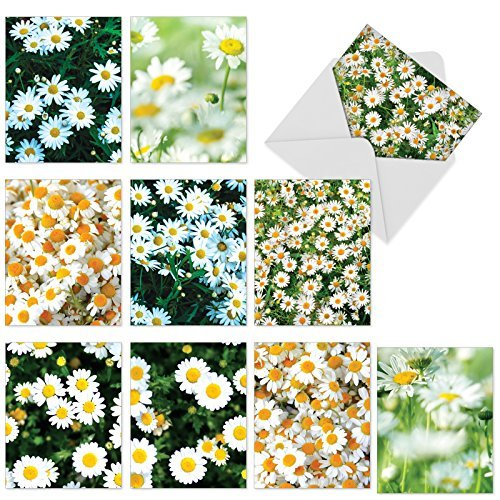 The Best Card Company-Oopsy Daisies: 10 Assorted Blank All-Occasion Note Cards