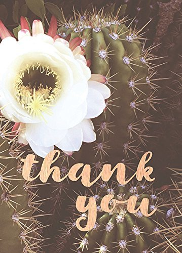 Lark Press-White Cactus Thank You Card, 3.5 x 4.75, Boxed Set of 6